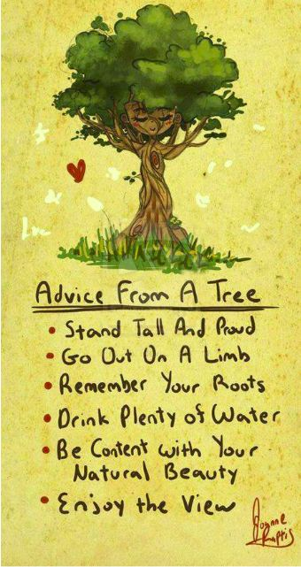 trees gives the best advice